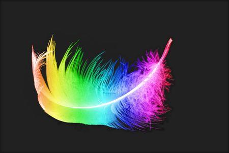 pluma blanca: coloridas plumas del ave sobre fondo negro
