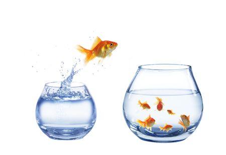 gold jump over to larger aquarium fish Stock Photo - 5566353
