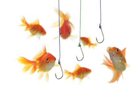 gold fish and empty hooks  on white background Banque d'images