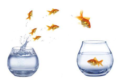 gold jump over to larger aquarium fish Stock Photo - 5617128