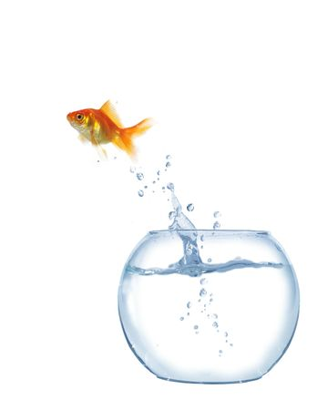 gold  jumping out from round glass aquarium fish Stock Photo - 5776290