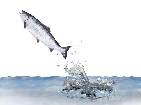 sautant du saumon de l'eau sur fond blanc Banque d'images