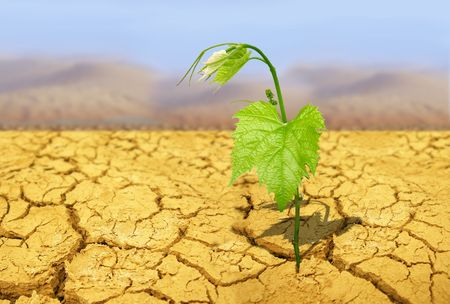 green plant on background of cracked soil Stock Photo - 6051165