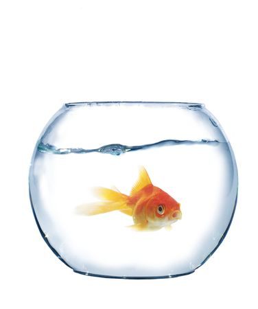 spherical: fish in spherical aquarium on white background Stock Photo