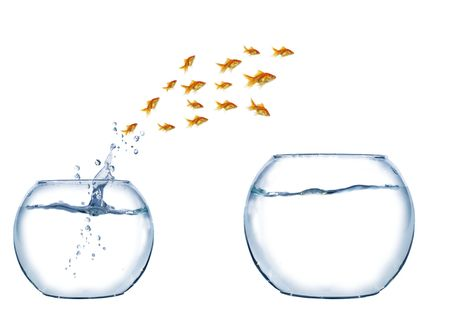 jump of shoal of fish to larger aquarium photo