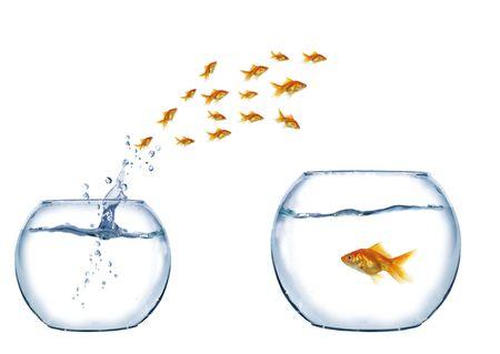peces de acuario: oro saltar a grandes peces de Acuario Foto de archivo