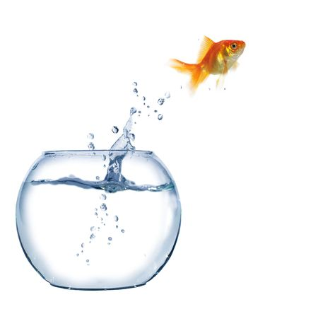 aquarium tank: jumping out fish from aquarium on white background