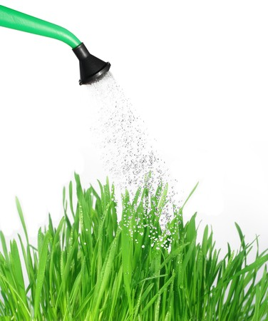 watered: watered from  watering can with water grass