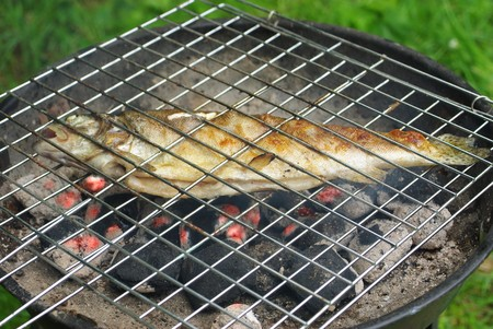 hued: rainbow hued frying on grill trout