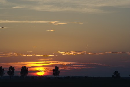 the setting sun over field from trees photo