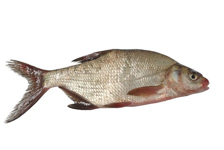 large fresh bream on white background Stock Photo - 7527234
