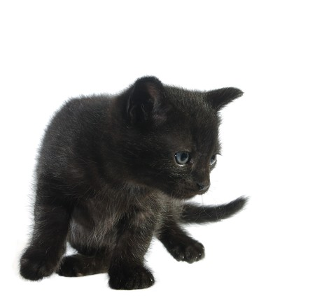moggi: young cat on white background Stock Photo