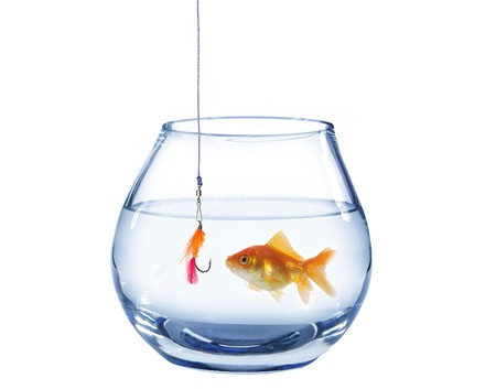 hook up: gold fish and artificial fly on white background