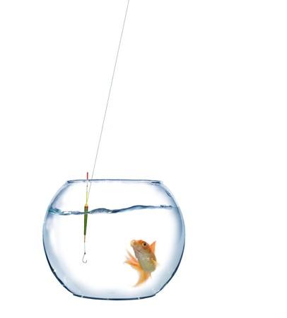 gold fish in aquarium and empty hook photo