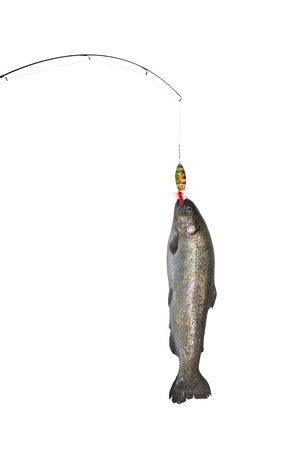 hued: the rainbow trout on fishing-rod on background of water Stock Photo