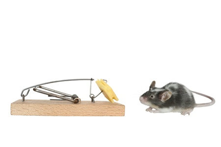mouse and trap on white background photo