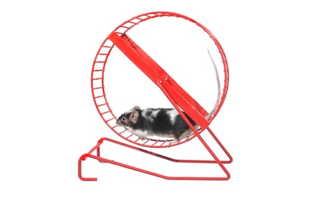 mouse  in rotatory wheel  on white background photo