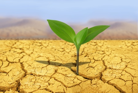 green plant on background of cracked soil photo