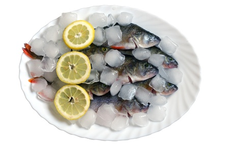 fresh fish in ice on a white background photo