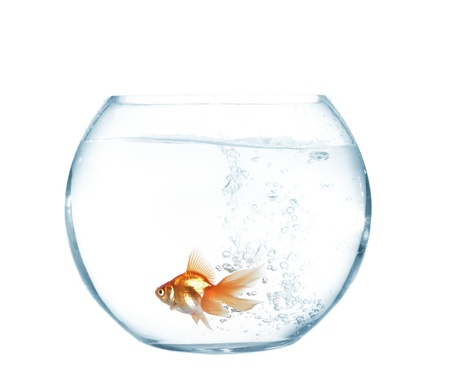 small gold fish in round glass aquarium photo