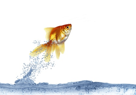 jumping out fish on white background Stock Photo