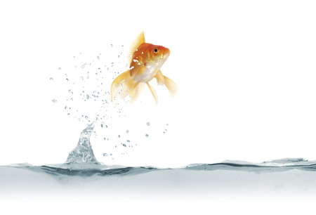jumping out fish on white background Banque d'images