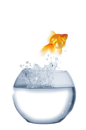 flee:  gold  jumping out from round glass aquarium fish