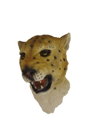 tiger Stock Photo - 13142592