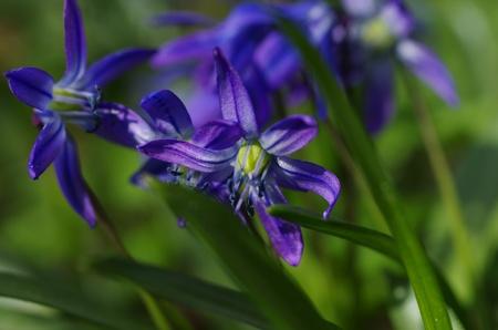 liverwort: beauty liverwort on flower background