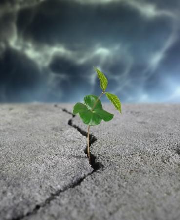 갈라진 금: 도로에 균열에서 성장하는 식물