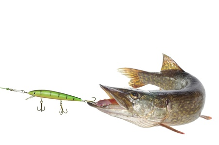long pike and artificial bait on white background Banque d'images