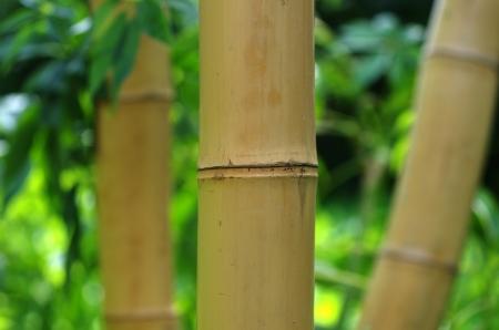 bamboo on plants background photo