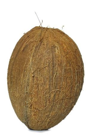 coconut onwhite background photo
