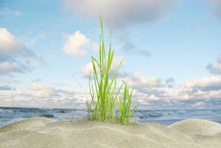 sawgrass: dune with grass on background of sea Stock Photo