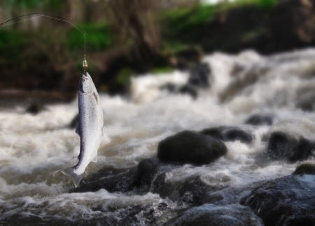 wobler: the salmon on fishing-rod on background of water Stock Photo