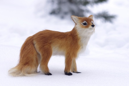 red fox on snow background photo