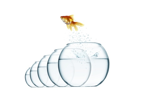 jumping out fish from aquarium on white background photo