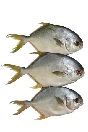 fishery products: three horse mackerel isolated on white background Stock Photo