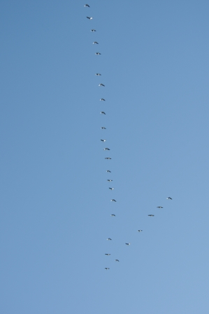 migrated: flying away the birds key on background of sky