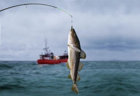 codfish on fishing-rod