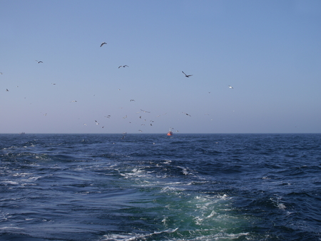 keel: ship trails in open sea and sea gulls Stock Photo
