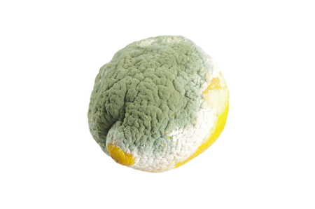 spoilage: moldy lemon on white background Stock Photo