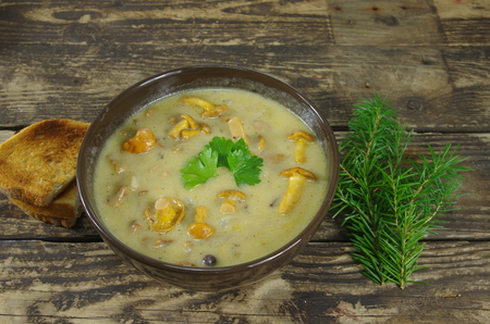 appetizing: appetizing cream soup with chanterelle mushrooms