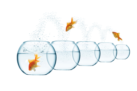 goldfish jump: jumping out fish from aquarium on white background