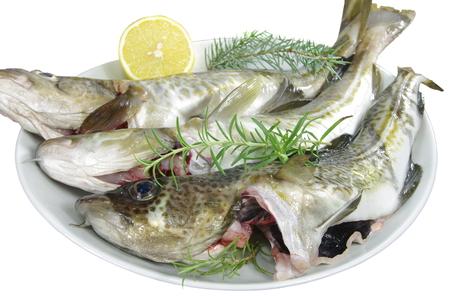 burbot: pescados de bacalao frescos en un plato blanco Foto de archivo