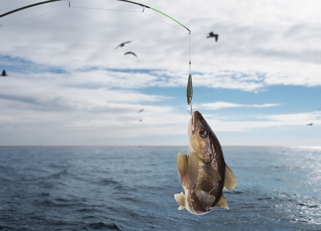trolling: codfish on fishing-rod on background of sea Stock Photo
