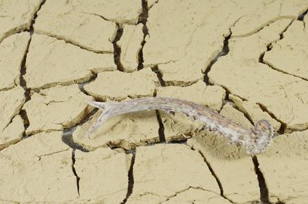 bocinas: cuernos de corzo en el fondo del desierto Foto de archivo