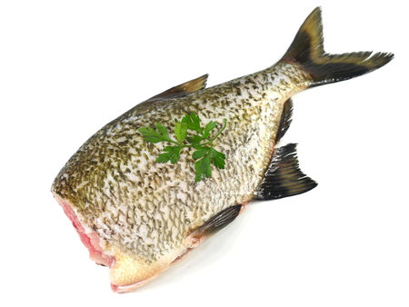 big fresh fish bream on white background Stock Photo