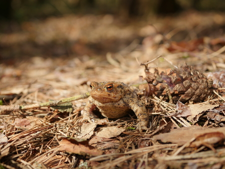 sitting brown toad on trees background Stock Photo