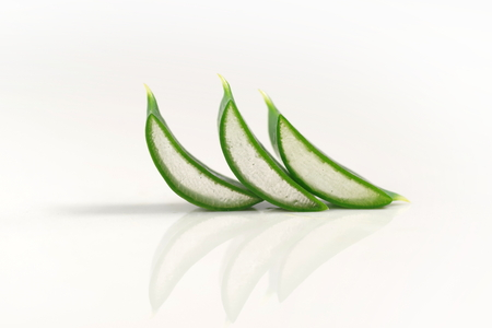 leaves of aloe on a white background Stock Photo
